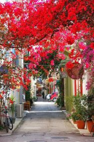 Flowers in Alley