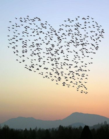 Heart of a bird